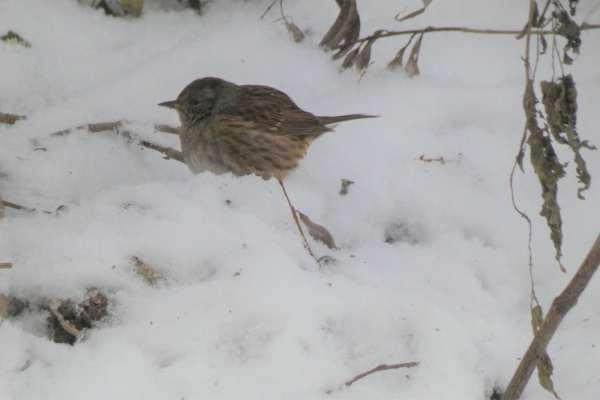 A wystarczy wezwać specjalistę ornitologa Mińsk Mazowiecki oraz polecić mu stworzenie odpowiedniego sprawozdania – opinie ornitologicznej Mińsk Mazowiecki.