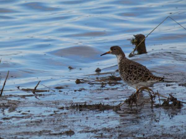 A wystarczy wezwać specjalistę ornitologa Legionowo oraz polecić mu stworzenie odpowiedniego sprawozdania – opinii ornitologicznej Legionowo.