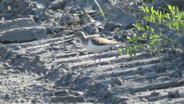 A wystarczy wezwać specjalistę ornitologa Otwock oraz polecić mu stworzenie odpowiedniego sprawozdania – opinii ornitologicznej Otwock.