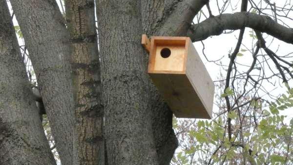 A wystarczy wezwać specjalistę ornitologa Sochaczew oraz polecić mu stworzenie odpowiedniego sprawozdania – opinii ornitologicznej Sochaczew.