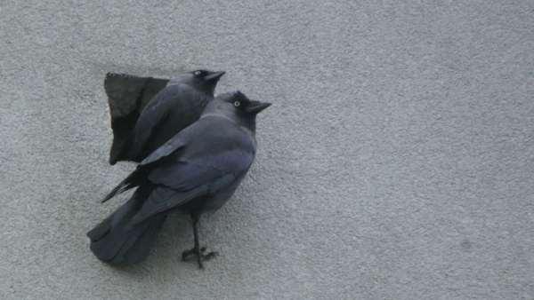 A wystarczy wezwać specjalistę ornitologa Siedlce oraz polecić mu stworzenie odpowiedniego sprawozdania – opinii ornitologicznej Siedlce.