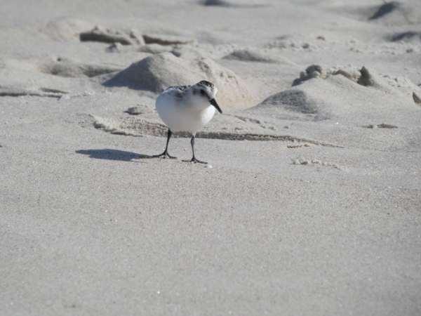 A wystarczy wezwać specjalistę ornitologa Łódź oraz polecić mu stworzenie odpowiedniego sprawozdania – opinie ornitologicznej Łódź.