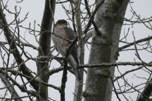 A wystarczy wezwać specjalistę ornitologa Grójec oraz polecić mu stworzenie odpowiedniego sprawozdania – opinie ornitologicznej Grójec.