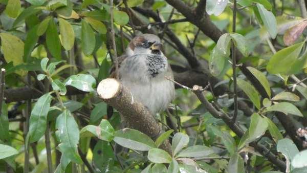 A wystarczy wezwać specjalistę ornitologa Pułtusk oraz polecić mu stworzenie odpowiedniego sprawozdania – opinii ornitologicznej Pułtusk.